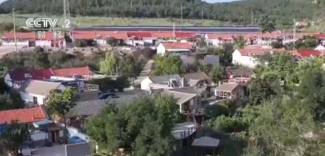 乡村振兴看一线 | 山东蓬莱:8万亩酿酒葡萄丰收 小葡萄串起大产业