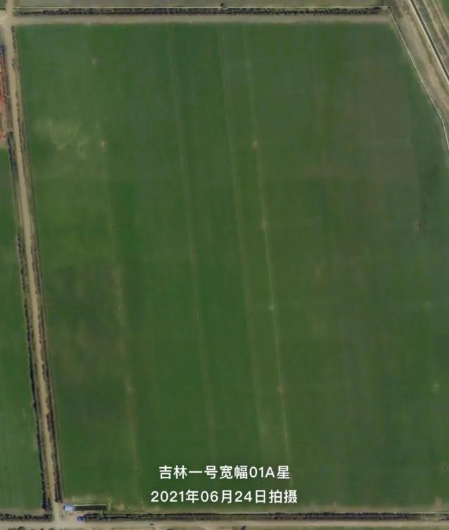 """新疆棉花大丰收 卫星图直击""""机械化""""现场"""