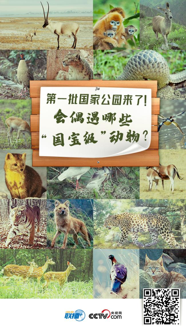 """我们的共同家园 第一批国家公园来了!会偶遇哪些""""国宝级""""动物?"""
