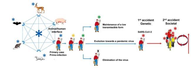 新冠病毒起源于墨江矿洞?法国新研究否认了