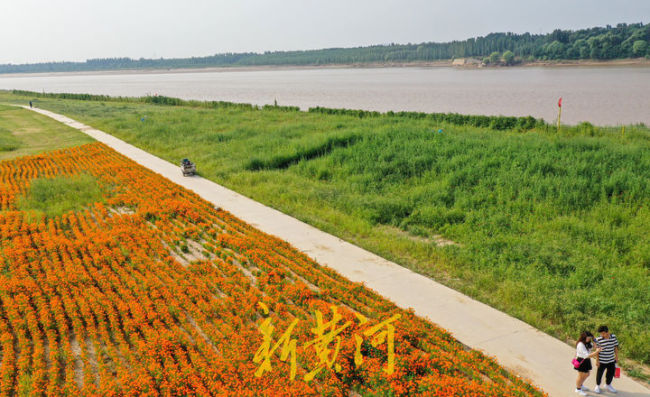 """这就是山东·济南丨黄河沿岸变身两万平""""星空花海"""""""