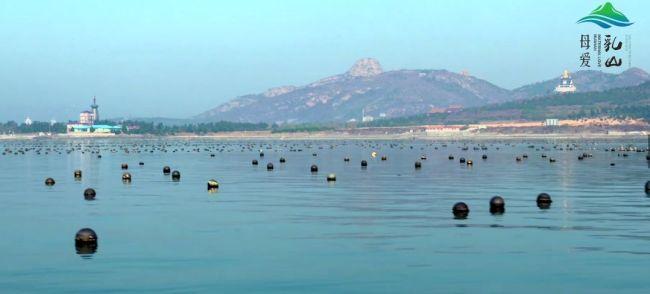 威海乳山构建牡蛎全产业链,加速产业新旧动能转换