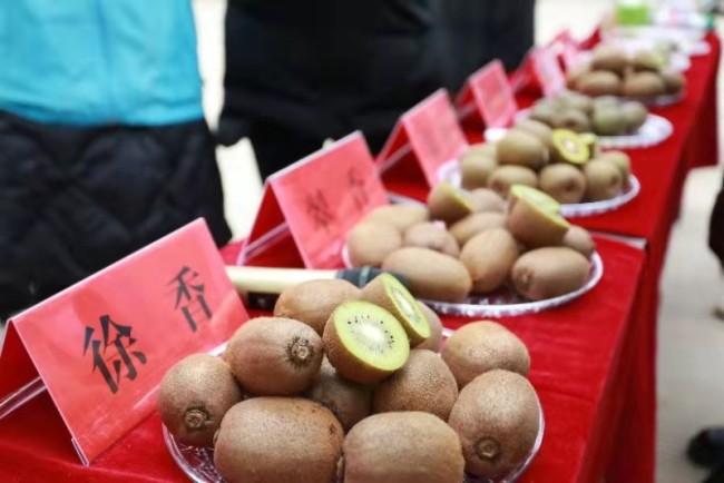 渭南临渭:推广猕猴桃新品种新技术 让果农增收产业增效