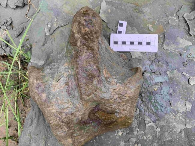 陕西延安安塞发现中国最古老的龟类足迹,距今约1.6亿年
