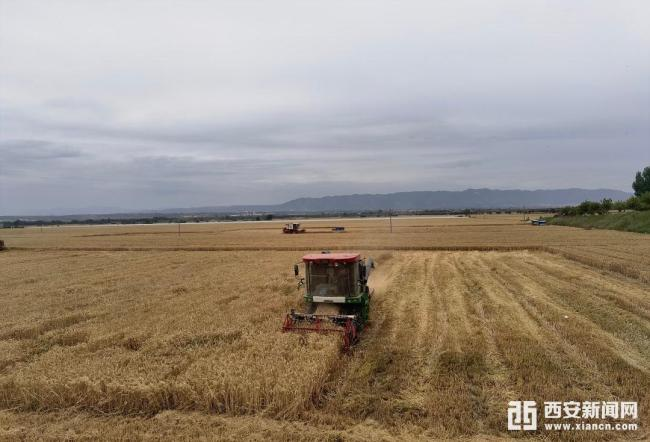 2021年西安夏粮喜获丰收单产339.81公斤/亩