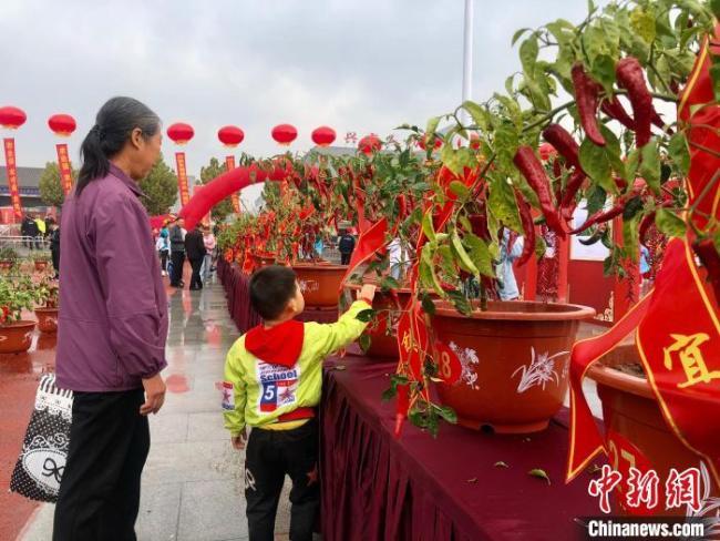 """辣椒产业从1.3万亩到9万亩 """"米粮川""""特色农产品远销韩国"""