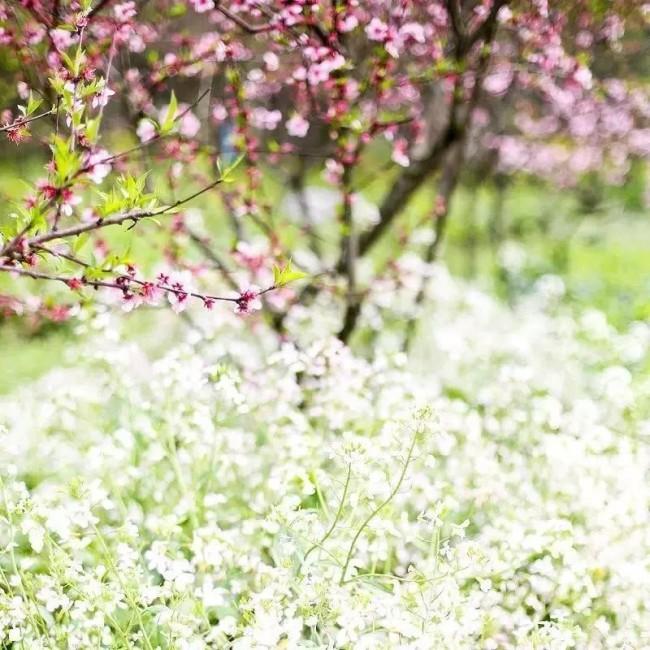于时光深处,静看花开花谢