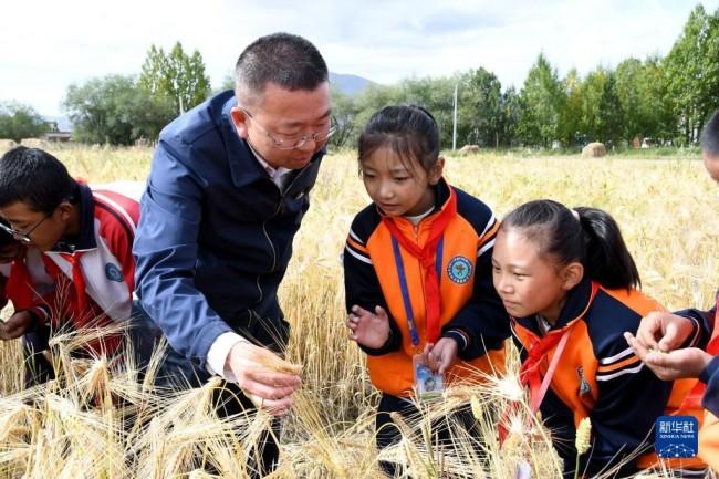 日喀则市上海实验学校德育副校长潘杰和学生在青稞地里交流(9月17日摄)。新华社发(施刚强 摄)
