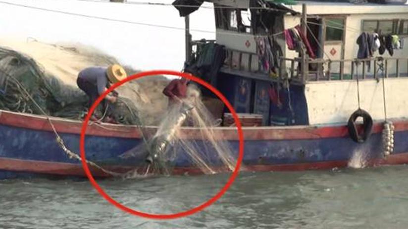 多地渔民捞到境外间谍窃密装置