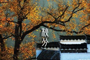 秋分:一叶落平分秋色