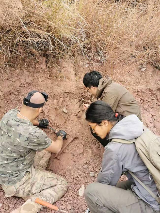 云南出土3岁恐龙化石