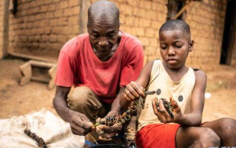 中非:丛林深处虫子宴